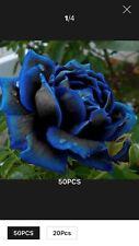 MIDNIGHT BLUE ROSE SEEDS ONE BAG AV 100 SEEDS