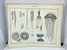 Antique large hand colored print 1843.Oken's Naturgeschichte Plate 3 Jellyfish