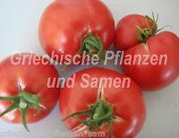 🔥 Griechische Fleischtomate 10 Samen tolles Aroma Rekorderträge Tomaten Tomate