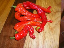 HOT COWHORN PEPPER  (30 SEED)