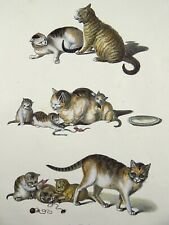 1824 Domestic Cats Brodtmann Mind ORIGINAL hand colored stone lithography