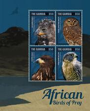 Gambia-2014-Birds-African birds of Prey