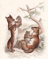 Proverbe Ce que Fait La louve Plait au Loup Wolf Jean Jacques Grandville 1870