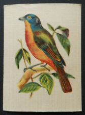 NONPAREIL FINCH English and Foreign Birds issued 1915 Morris SILK