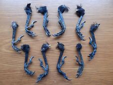 10  Dry Rook / Crow Feet  Taxidermy  Pagan  Arts & Crafts  Wierd