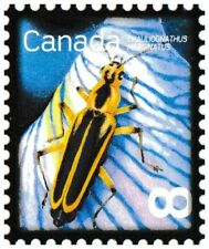 Canada 2409 Beneficial Insects Margined Leatherwing 8c single (1 stamp) MNH 2010