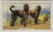 Afghan Hound Dog Canine Pet 1930s Ad Trade Card
