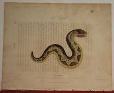 MOROCCO CERASTES CERASTES 1809 JACKSON ANTIQUE ORIGINAL PLATE FIRST EDITION