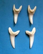 """4pcs.-1 7/8""""(47.5mm) White MAKO SHARK TOOTH for jewelry quality SB-15"""