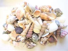 Muschelmix large 1kg Schnecken Südsee Karibik Aquarium Streudeko Beach Floristik