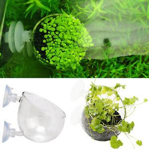 Bonsai Mini Pot Aquarium Accessories Aquarium Fish Tank Water Grass Plant Seeds
