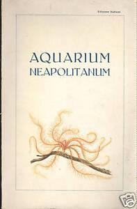 Guida ad Aquarium neapolitano 1927 Stazione geologica