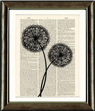 Old Antique Book page Art Print - Dandelion Seedhead 2- Dictionary Wall Art
