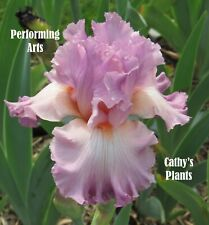 Tall Bearded Iris ~ Performing Arts ~ Additional wins ship $1.25 each