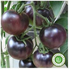 25 Graines de Tomate, Cerise Noire. légumes anciens. Heirloom graines