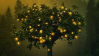 MAGICAL ORANGE TREE CANVAS PICTURE  WALL ART 20X30 INCHES
