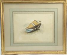 Fine Gold Leaf Framed Antique Hand Colored Sea Shell Conchology Print 99 NR KPB