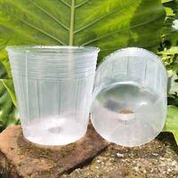 50 PièCes SéRies la Tasse de Semis Transparente OrchidéE Succulente Pot Tra A1J7