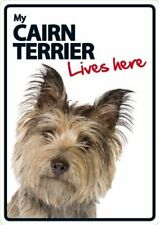 Cairn Terrier Lives Here A5 Plastic Sign