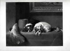 Stampa antica CANI TOY SPANIELS accucciati su un tavolo Landseer 1859 Old print