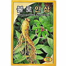 20 PCS Korea Wild Ginseng Vegetable Herb Seed Korea Panax Cultivation M_o