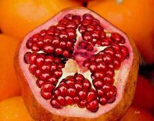 Pomegranate 1Lb Freeze Dried Powder