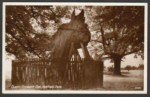 Postcard Hatfield Park Hertfordshire the Queen Elizabeth Oak tree RP