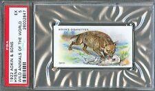 1922 Adkin & Sons HYENA Wild Animals of the World Trade Card PSA 5