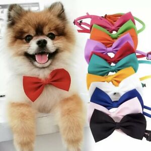 Colours Bow Tie Collar Adjustable Design For Kitten Puppy or Small Dog Cat