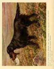 A4 Photo Dog 1911 Maud Earl Flat coated Retriever Print Poster