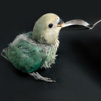1pc Pet Bird Parrot Cockatiel Metal Hand Milk Food Medicine Feeding Spoon···