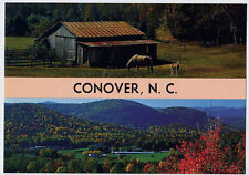CONOVER NC 2 early Views Horse MARE and COLT nr HICKORY NC GASTONIA NC postcard