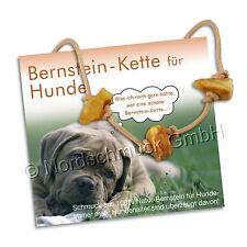 Bernsteinkette für Hund Katze Mensch Bernstein roh Hundekette Halsband bis 80 cm