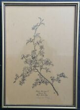 LYS de BRAY Signed Original Lithograph Botanical Art Illustration