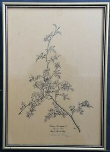 LYS de BRAY Signed Original Lithograph Botanical Art Illustration