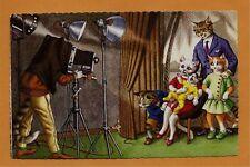 Mainzer Cats Postcard-#4730 Family Portrait Cats Perfect Unused Condition