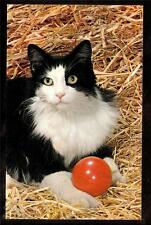 c1960 vintage chrome handsome black & white cat playing with ball postcard