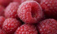 GIANT RASPBERRY SEEDS RARE PLANT FRESH GARDEN PLANT FRUIT SEED - AU STOCK