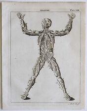 1797 Anatomy Human Heart Blood Vessels Arteries Veins Genuine Antique Print