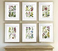 English Wild Flowers Botanical Art Reproduction Unframed Set of Six Wall Art Pri
