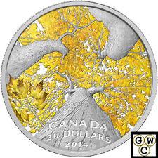 2014 Autumn Allure - Maple Canopy Color Prf $20 Silver 1oz .9999 Fine(NT)(14008)