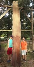 Old Growth Double Live Edge Ultra Rare Burl Sinker Cypress Wood Slab Kiln Dried