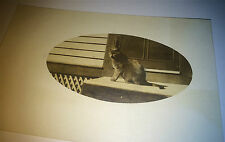 Antique Beautiful Outdoor Porch Cat, Pet Animal Real Photo Postcard! RPPC! Kitty