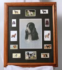 Cocker Spaniel Collage Framed Matted Photos Stamps Cigarette Cards Beautiful