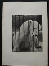 Antique Print: Polar Bear Photograph from Wild Animals by J Fortune Nott, 1886