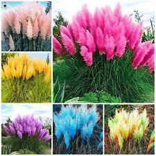 Mixed Pampas Grass Seeds Plants Bonsai Ornamental Flower Bonsaias Rare 200pcs