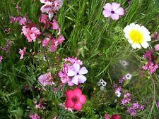 Blumenwiese Mischung Samen ohne Gras für 5 qm aus eigenem BIO-Garten