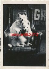 Foto, Werkschutz, tierische Bande, Mons1940, Belgien, (W)1809