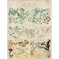 Kato Chikusai Species of Flora Fauna Mushrooms Japanese Huge Wall Art Poster