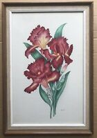 Original Art Watercolour Painting Floral Picture Bearded Iris By R. W. Witt